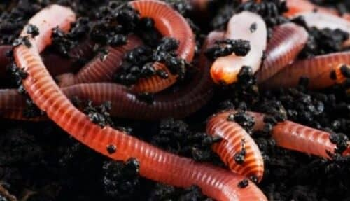 Разводить червей можно в гараже или погребе, соблюдая необходимый температурный режим