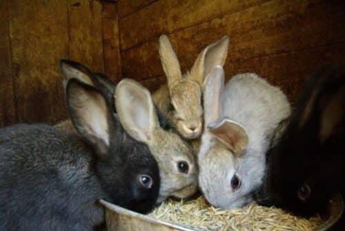 Кормление кроликов на фотографии