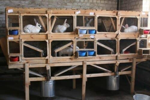 Кролики в деревянной клетке на фото
