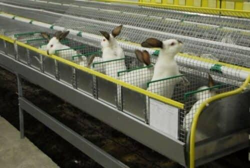 Кролики в клетках на снимке