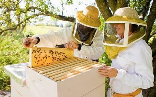 Пчеловодство как бизнес имеет неплохие перспективы, но и сил вложить надо много