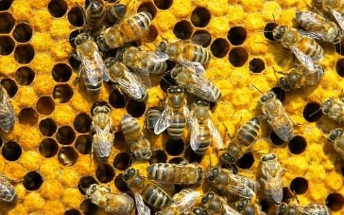 Бизнес ниша пчеловодства имеет мало конкурентов