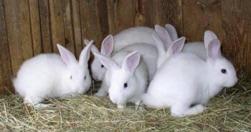 Ямочный метод разведения кроликов а фото